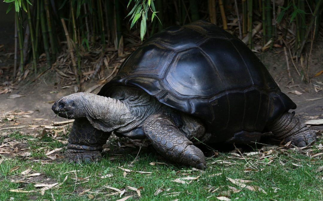 La geóloga y la tortuga