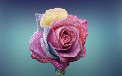 Ser una flor (cuento)